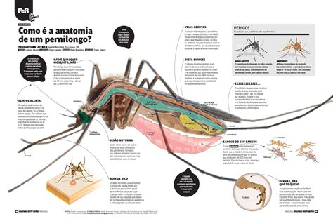 anatomy of a mosquito anatomy gallery
