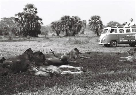 The Evening News Courtesy Of Magazine Mound by Resurrecting Mozambique S Magnificent Gorongosa Club