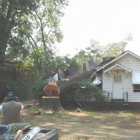 man let dumb neighbor cut a tree in front of his house