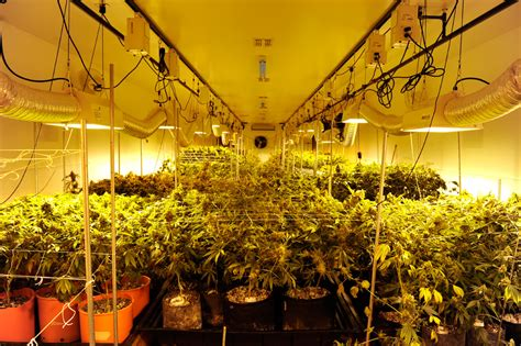 marijuana grow room cannabist q a grow room tours stocks strain