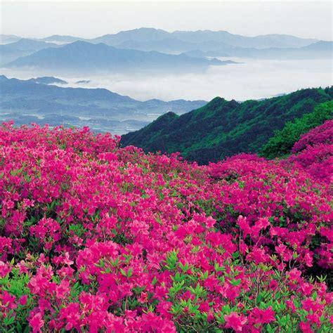 imagenes de paisajes rosas paisajes de flores paisaje y flores para ipad verde rosa