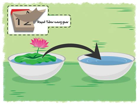 lotus flower growing 3 ways to grow lotus flower wikihow