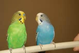 Pet Birds Related Keywords & Suggestions - Pet Birds Long Tail ... Pet