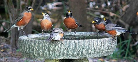 attracting backyard birds attracting birds birding basics