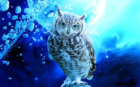 owl background owl background wallpapersafari