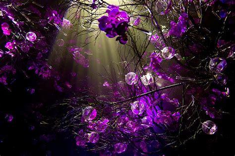 wallpaper for laptop desktop purple bubble wallpaper cnsoup collections wallpapers
