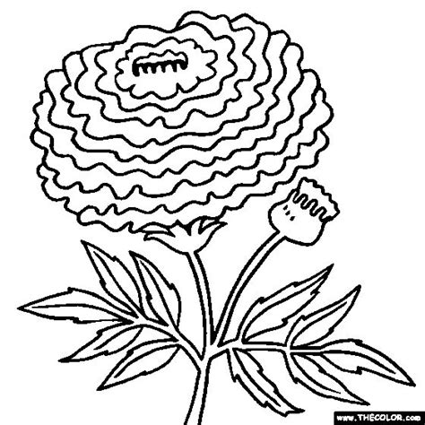 line drawing of a marigold clipart best