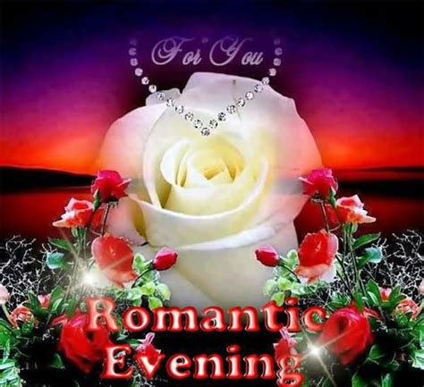 romantic evening  white rose good evening wishes picture funnyexpo
