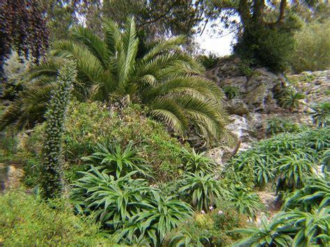 Ventnor Botanic Gardens Ventnor Botanic Garden The Constant Gardener