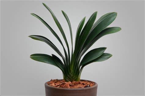 what is a foliage plant foliage plants miniature plant 3rd place