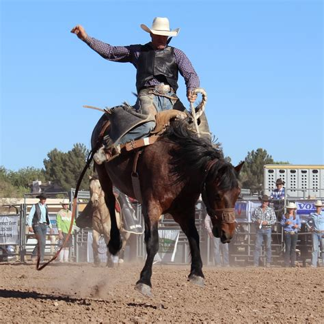 horses that buck the story of chion bronc rider bill smith the western legacies series books nmsu rodeo team finishes season strong article