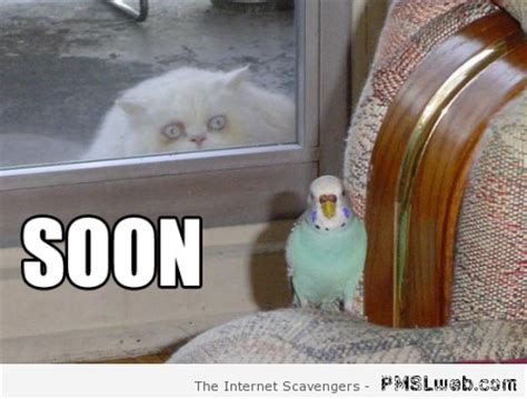 Soon Cat Meme - funny cat pics when the wild kitty cats take control pmslweb
