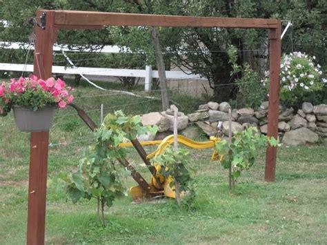 wine trellis grape trellis gardening and flowers