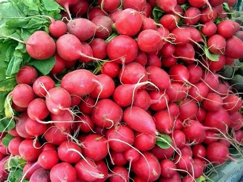 come si cucinano i ravanelli come coltivare i ravanelli coltivare orto coltivare i