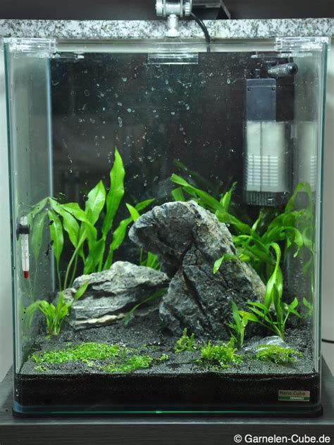 Nano Aquarium Pflanzen by Nano Cube Einrichten Garnelen Cube