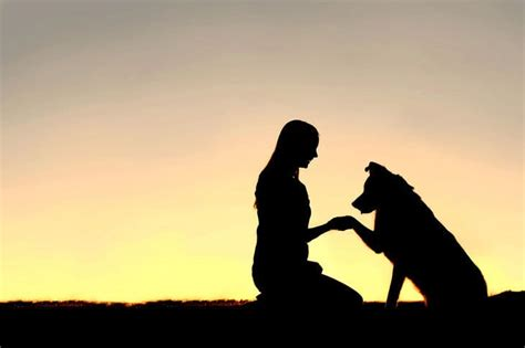 dogs and humans cross species bonding nonhuman beings in human social services the mindful word