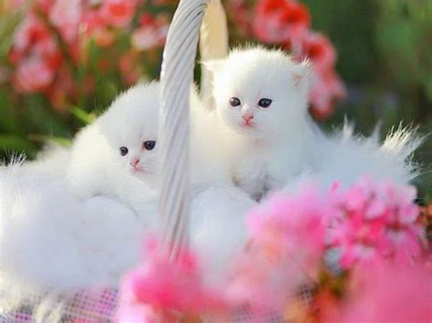 cute cats  beautiful  innocent
