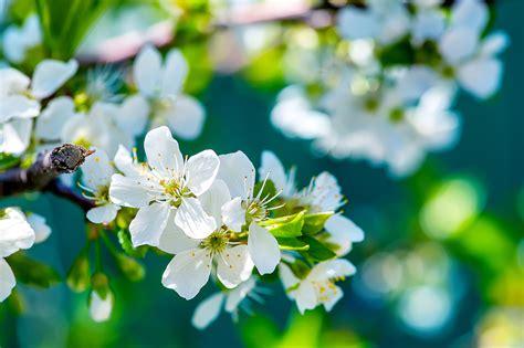 flowers sky nature light plant bloom hd wallpapers nature hd wallpaper flower mojmalnews