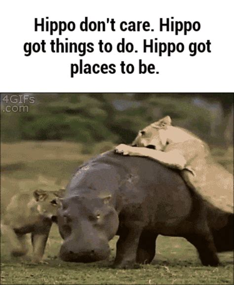Hippo Memes - hippo don t care animals know your meme