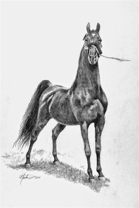 caballo a lapiz dibujos de animales pintura moderna y fotograf 237 a art 237 stica caballo dibujo
