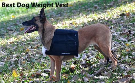 weight vest for dogs best weight vest the ultimate guide
