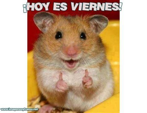 imagenes de animales graciosos para compartir en facebook animales graciosos hoy es viernes imagenes para facebook
