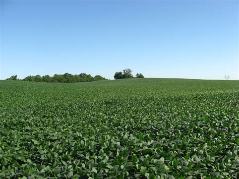 Fields Of Green Original Board soy bean soy beanoil tools to harvestsoy beans 点力图库