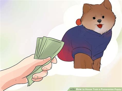 how to potty a pomeranian how to a pomeranian puppy tricks howsto co