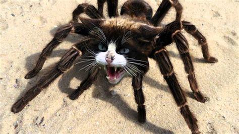 Imagenes De Animales Fusionados | animales fusionados con photoshop youtube