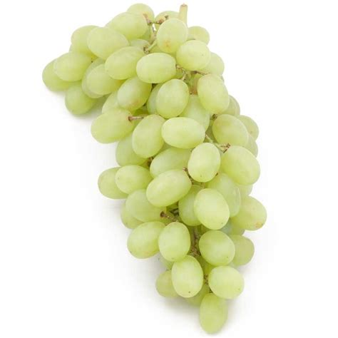 Table Grapes by Bare Root Table Grape Vine Thompson Seedless Groworganic