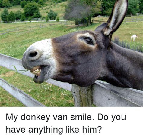 funny donkey memes 28 images funny donkey meme 35