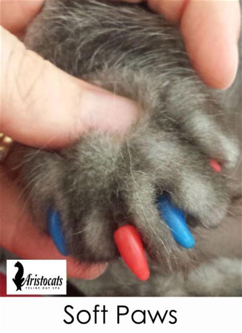 soft paws nail caps aristocats