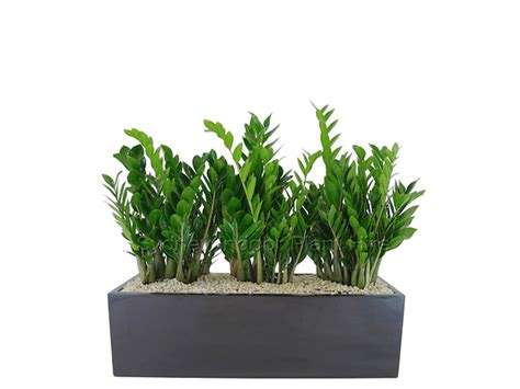 Planter Boxes Sydney by Planter Box Hire Sydney Building Foyers Showrooms