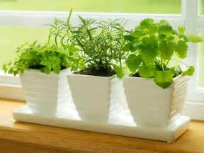 easy herb garden 10 easy diy kitchen herb gardens room amp bath