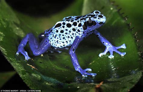imagenes animales hermosos los animales y sus colores en su esplendor taringa