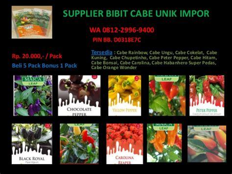 Jual Bibit Cabe Impor promo wa 0812 2996 9400 bibit cabe rainbow cabe