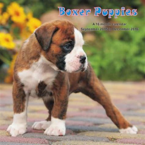 boxer dog desk calendar images of puppy boxer dogs www pixshark com images