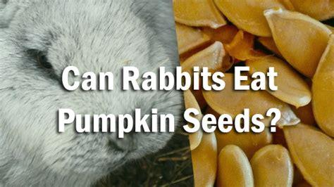 can dogs eat pumpkin seeds can rabbits eat pumpkin seeds pet consider