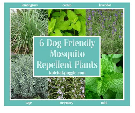 mosquito repellent plants friendly decks safe mosquito kol s notes