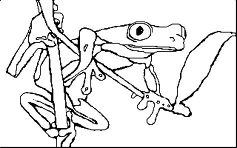 coloring pictures of tree frogs red eyed tree frog clipart black and white pencil and in