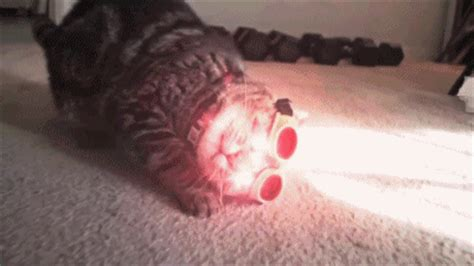 cyclops cat kitty bloger