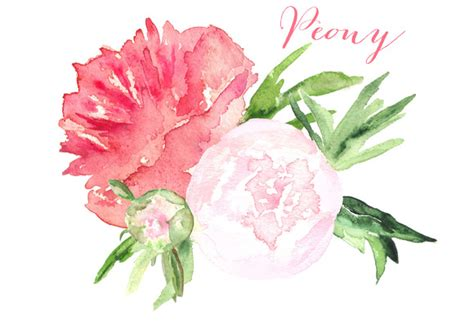 peony clipart peony watercolor clip graphics on creative market