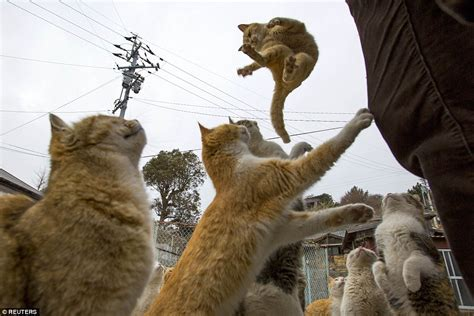 japan s aoshima island cats outnumber humans six to one