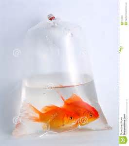 Home Design And Plans Free Download gold fish in plastic bag stock image image 9145661