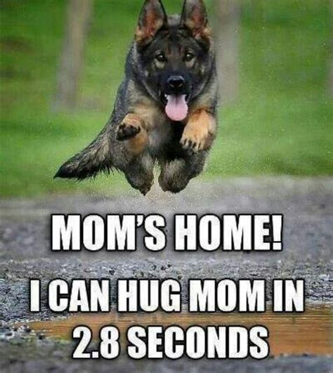 welcome to the home of new beginnings shepherd rescue moms home this is so true when i walk in i must be