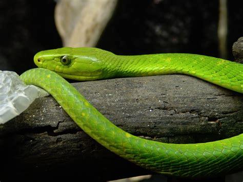 imagenes de serpientes verdes serpientes i la exuberancia de hades