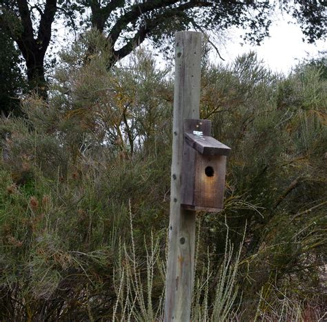How To Make Bird Houses by How To Build A Bird House