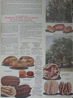 Stark Brothers Fruit Trees - 1000 images about stark bro s since 1816 on pinterest stark brothers louisiana and catalog