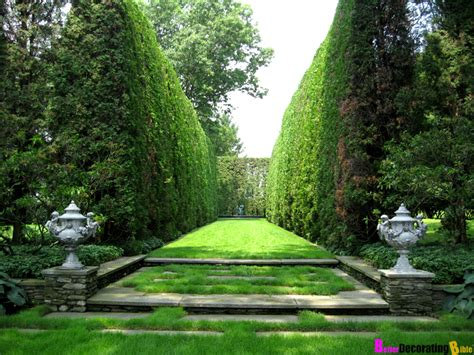 trees for backyard privacy backyard privacy plants blog hedge shrub privacy