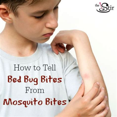 Mosquito Bites Vs Bed Bug Bites How To Tell The Difference To Tell Mosquitoes Bites And Beds